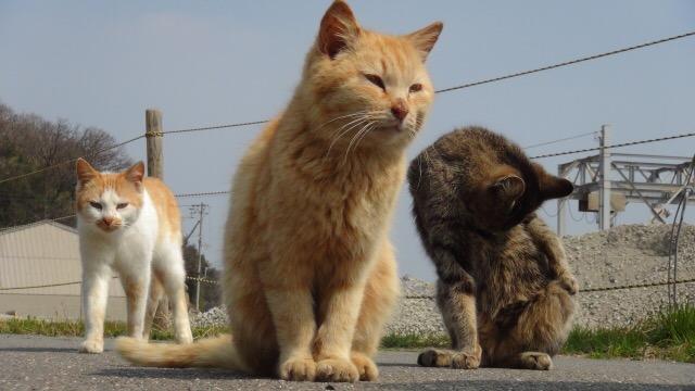 猫背は顔が大きくなる
